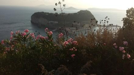 Nisidia Island flowers