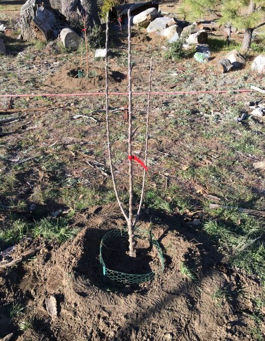 Tree Planting (and replanting) Day