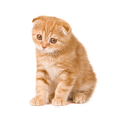 Кот мяукает почему