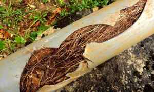 Signs That You May Have Tree Roots in Your Pipes