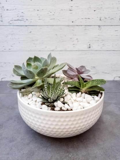Jardin de succulent blanc - Fleuriste Coin Vert