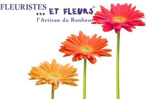 gerbera fleuristes fleurs artisan bonheur
