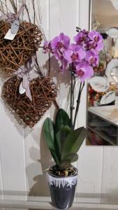 Orchidée par Martine Fleurs à Six fours les plages-83140