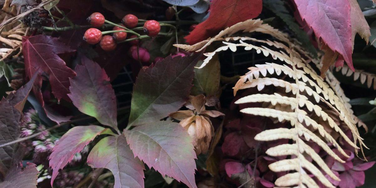 b.cornut fleuriste - L'automne et ses belles couleurs
