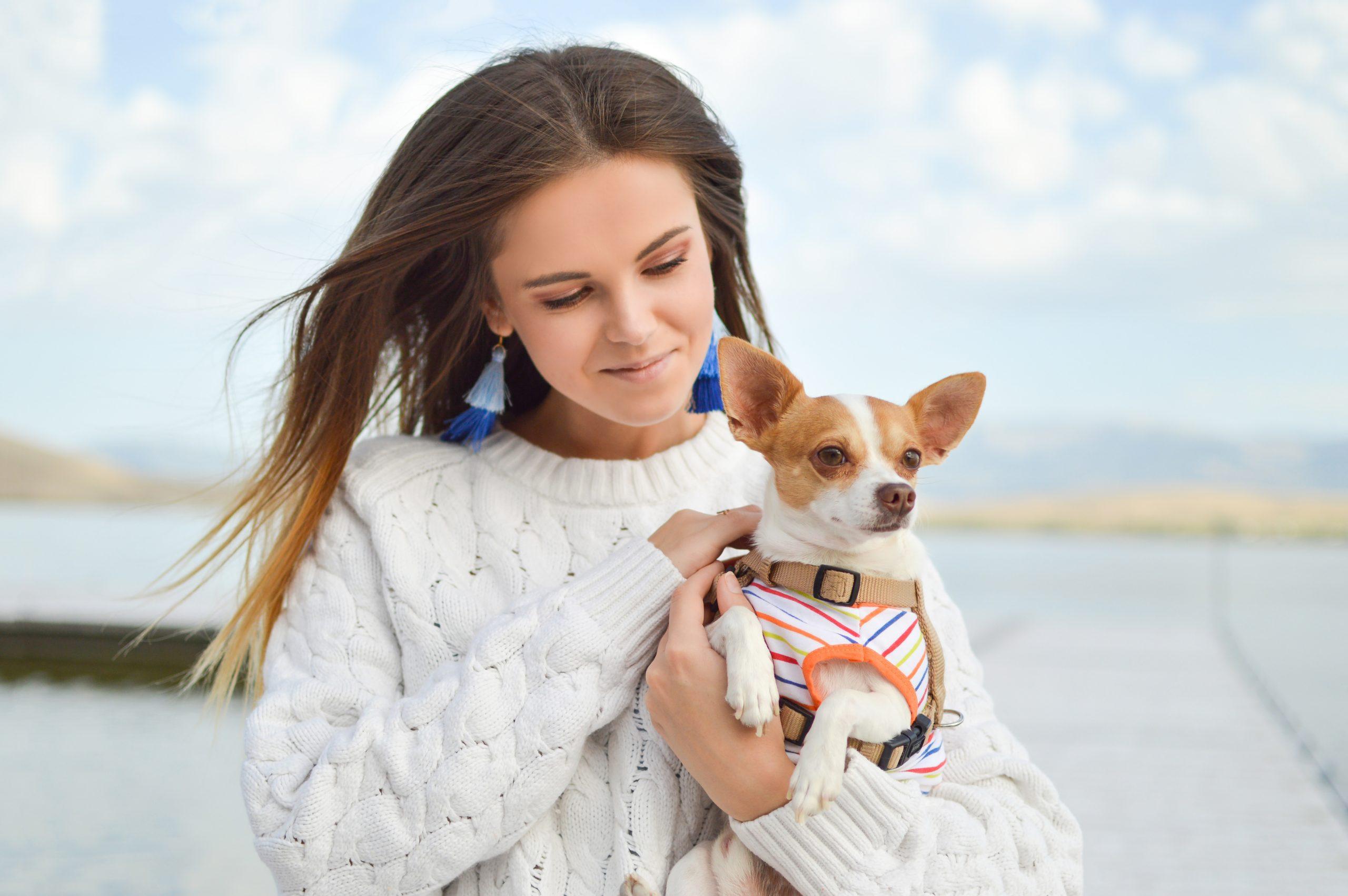 Assurance Chihuahua