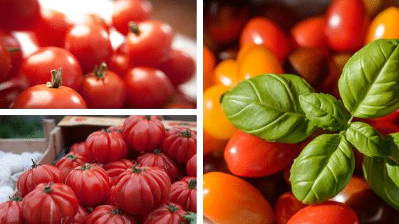Alimentation et santé : zoom sur les tomates