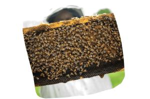 Mieux vaut acheter du miel chez un apiculteur local pour être sûr de sa qualité