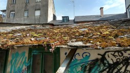 Accidental green roof, Vigo