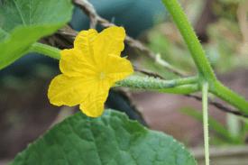 flowergarden12