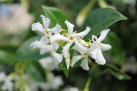 flowergarden9