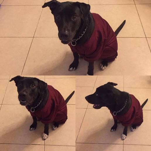 schooldogathena