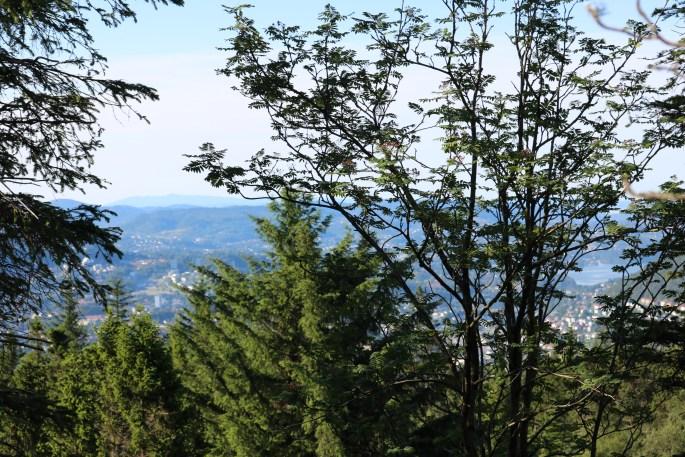 Mount Floyen Friday