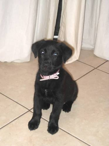 Maya_puppy