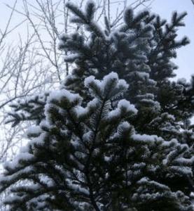 クリスマスツリー 由来