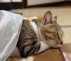 こたつで寝ると太るってホント?!風邪や頭痛もこたつの影響?