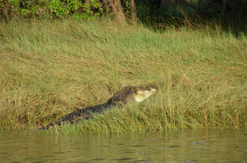 This was the biggest croc I saw the whole time...I was convinced it was a five metery but was told casually 'he'd only be 3.5 metres'