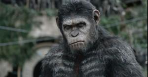 Apes 9