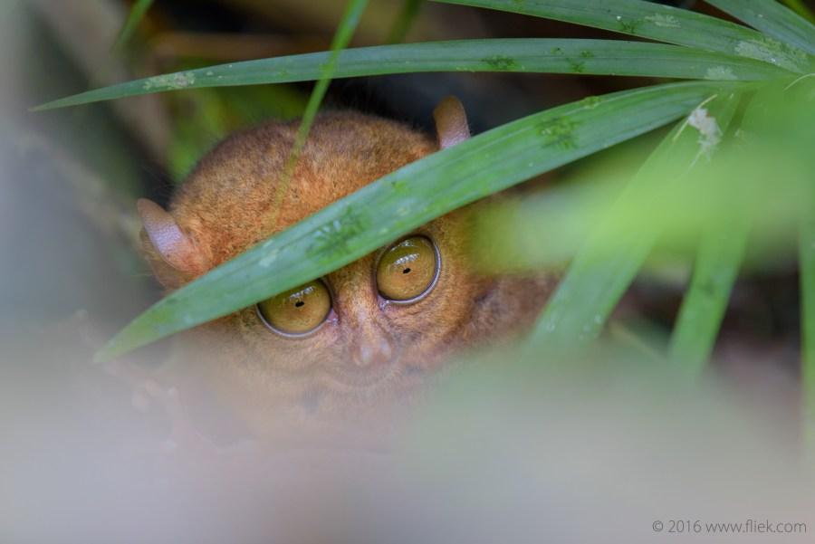 hiding in sight