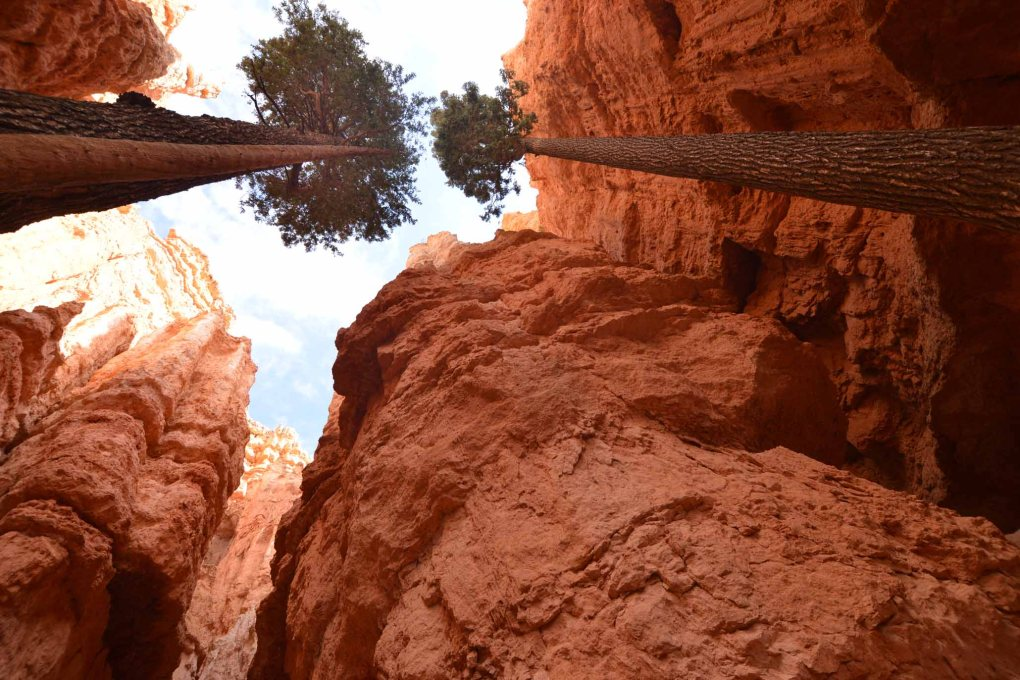 Bryce Canyon from below