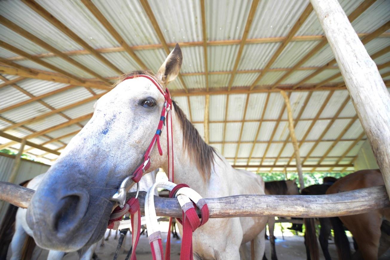 Rhodes Hall Plantation, Negil Jamaica, horseback riding