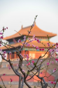 Springtime flowers and the Forbidden Palace, Beijing