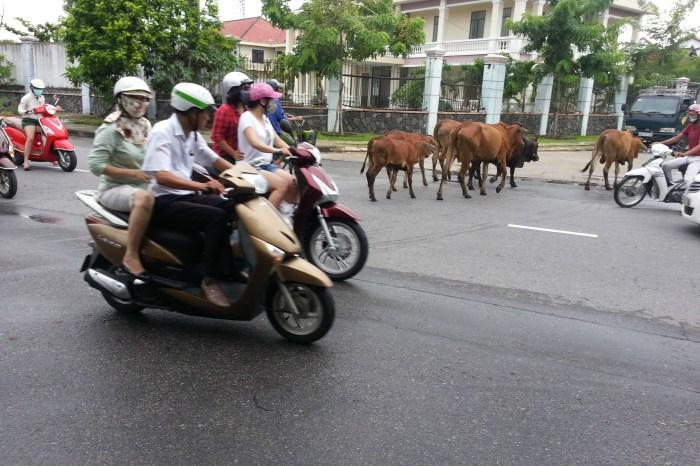 Hue to Da Nang via Easy Riders Vietnam