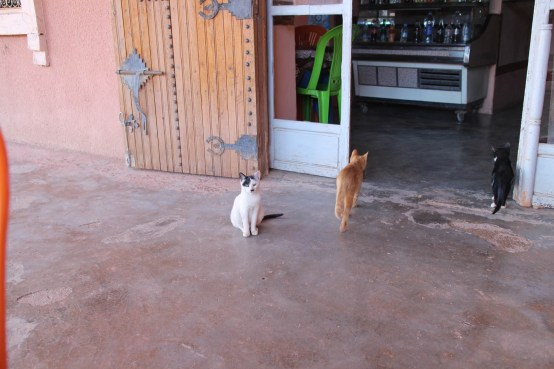 Cats looking for a meal