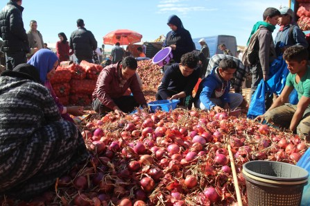 Sifting through the onions