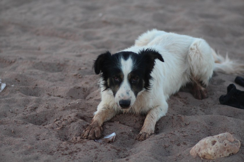 Playful local dog