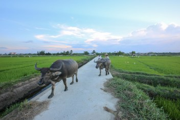 Riding Bikes through the Rice Fields