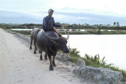 Local Man on a Water Buffalo