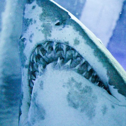 Shark - Aquaria KLCC