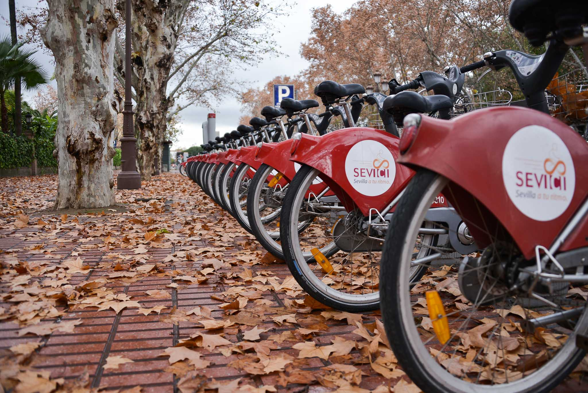 Winter leaves and bicycles