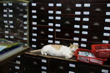 Cat Nap and Chinese Medicine
