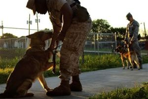 Air Force working dogs train