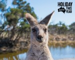 book cheap domestic australia flights with flightsale and holiday here this year