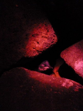Penguins at St Kilda is where I found Two Penguins In The Red Light District