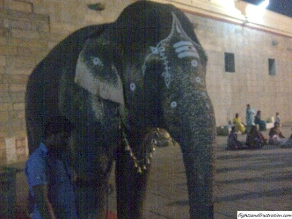 An elephant giving blessings at the Madurai Meenakshi Amman Temple