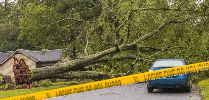 Horizontal photo of fallen tree in a street with caution tape up after Tropical Storm Irma
