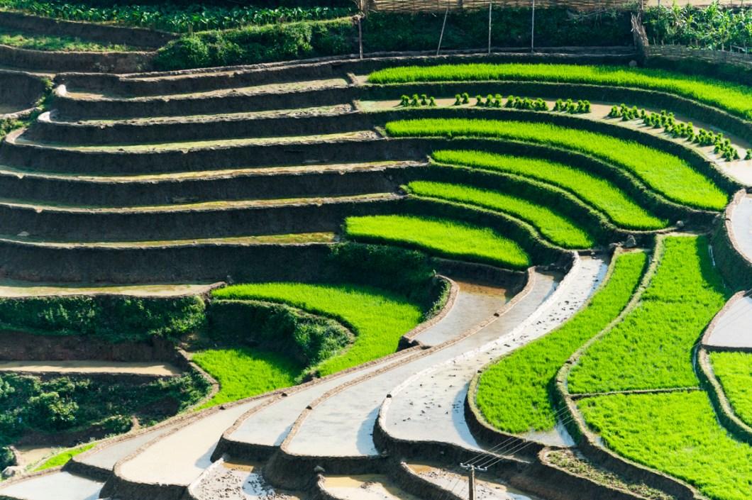 Sapa Rice Terrace with Curve