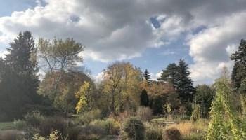 Botanischer Garten Dresden 10