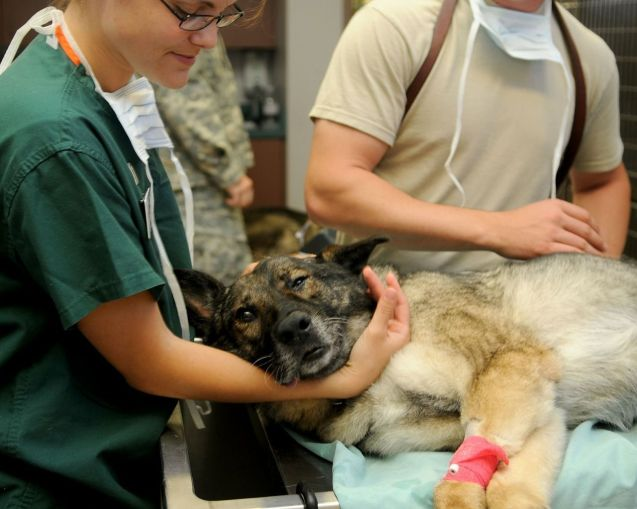 Mascota atendida en el veterinario