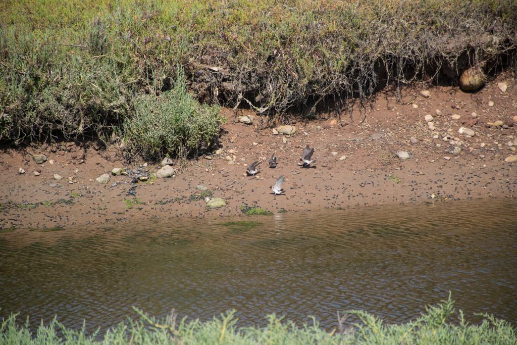 Birds at Tijuana Estuary visitor center