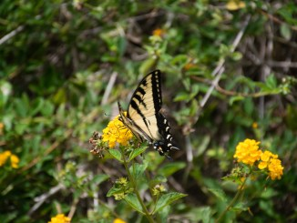 Butterfly on a flower at the Bird and Butterfly Garden in Tijuana River Valley Regional Park