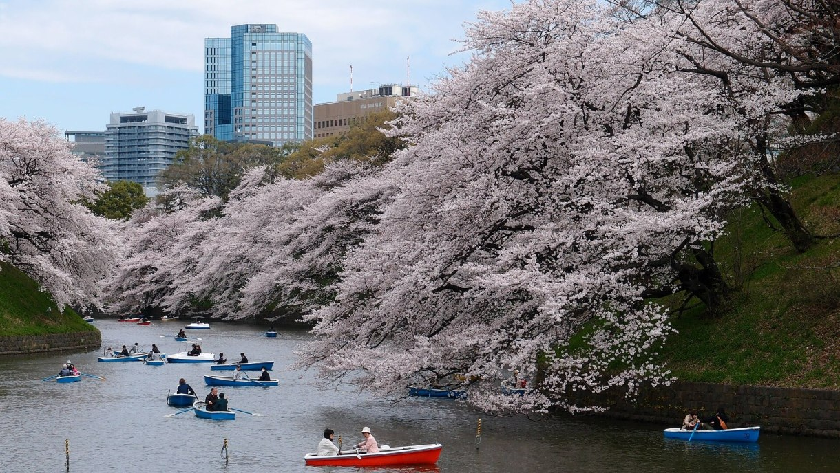 boat-cherry-blossom-park-river-tokyo-japan