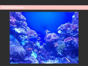 sea-aquarium-6