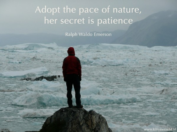 patience, mindfulness, cultivating patience