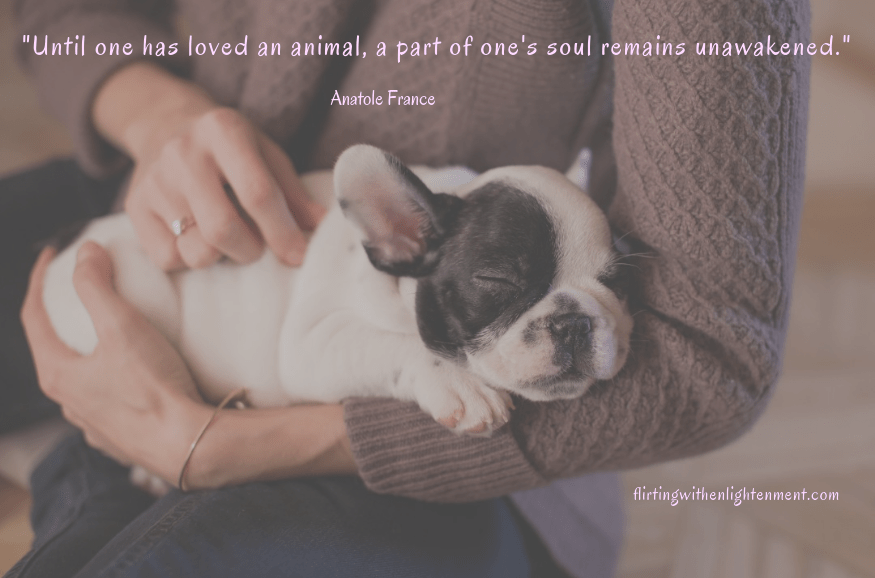 benefits of pets, pets, unconditional love, health, happiness, sleeping puppy