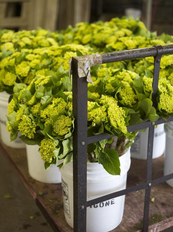 Fresh Francisco Farm San Flowers