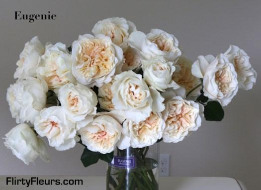 Flirty Fleurs Rose Study - Eugenie David Austin Garden Roses - Alexandra Farms